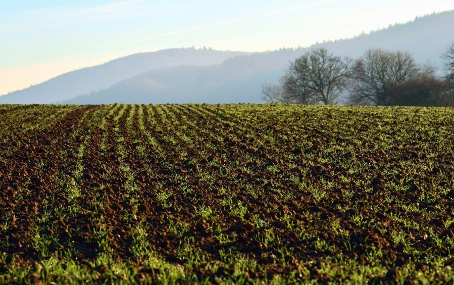 pole, zemědělství, zemědělství, vesnice, hory, strom