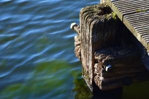 dock, screw, wood, water, beam, moss