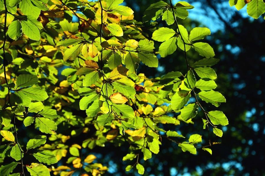 Treetop, yaprak, orman, şube, bitki