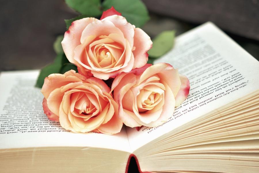 Róża, książki, kwiaty, miłość, płatki, roślina, czytanie