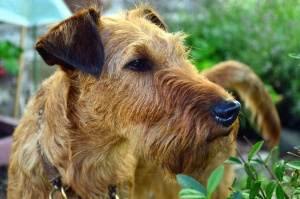 dog, animal, domestic animal, pet, fur, snout