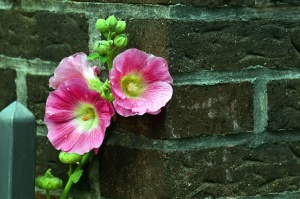 flower, bloom, petal, plant, wall, brick
