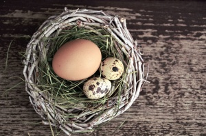 nest, egg, chicken, bird, grass, wood