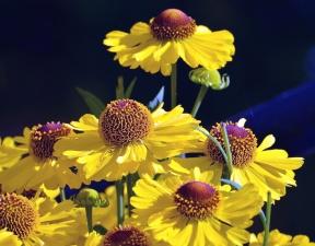 haulm, flower, plant, spring, petal