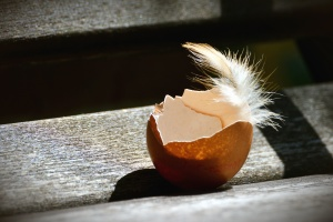 egg, chicken, feather, wood, bench