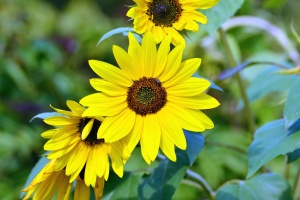 cvijet, biljka, latica, pelud, tučak, list