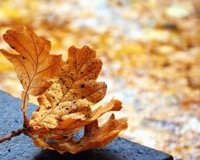 beton, ősz, növény, járdán, levél