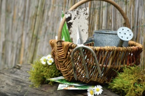 basket, daisy, basket, seed, leaf, still life