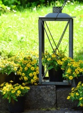 flowerpot, flowers, plant, grass, concrete