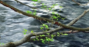 wood, leaves, river, water, branch