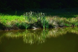 lake, coast, grass, water, reflection