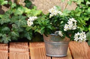 hink, blomma, trä, bord, kronblad, blad