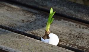 plank, tuber, egg shell, wood, plant