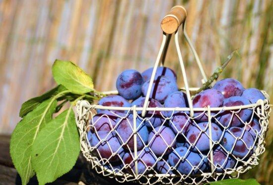metal, basket, plum, leaf, fruit, food