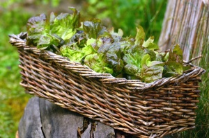wicker basket, wood, plant, leaf