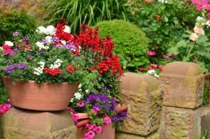 Blume, blüte, blumentopf, keramik, stein, garten