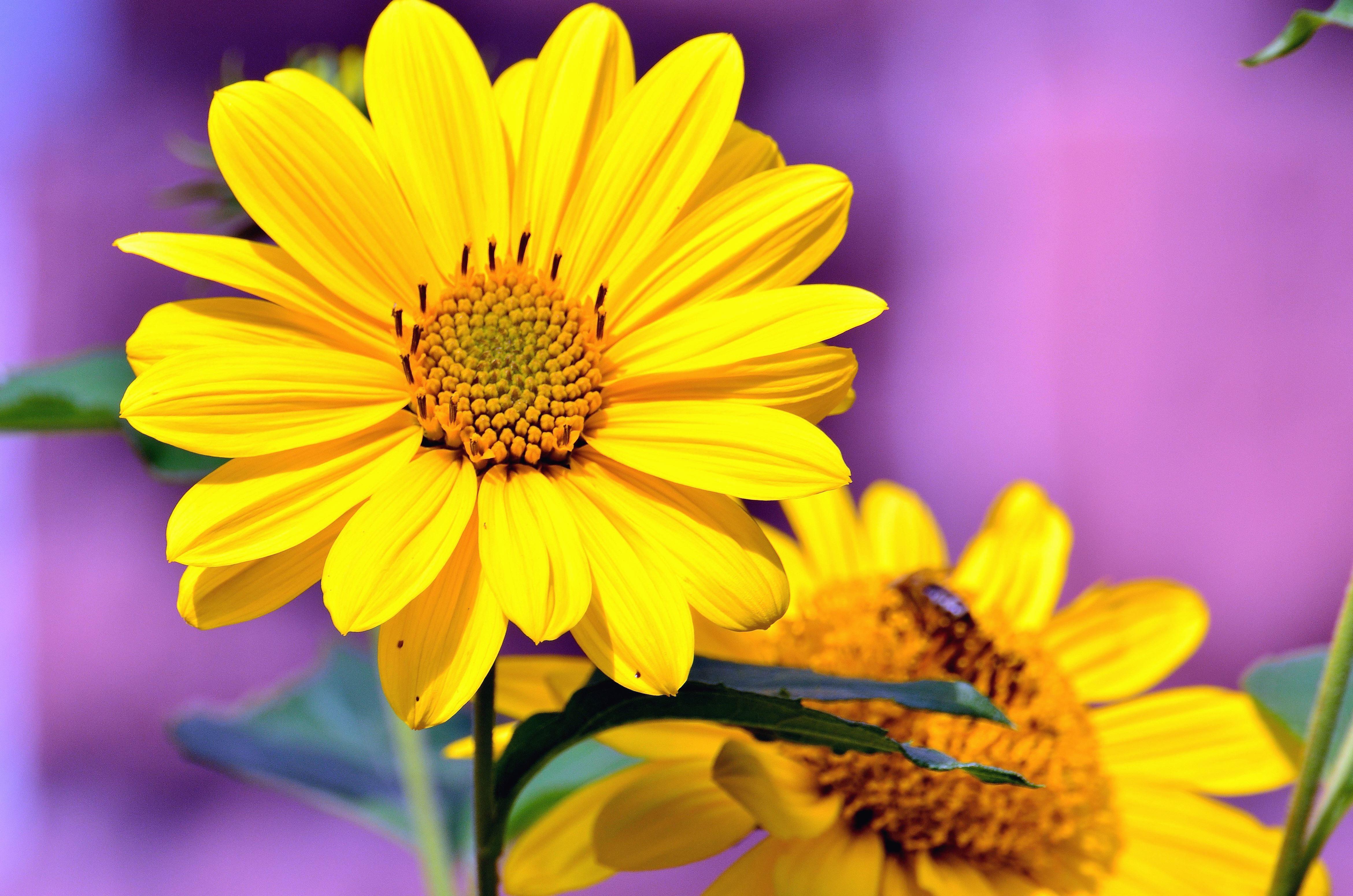 Image Libre Fleur Jaune Petale Fleur Feuille Pistil