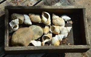 상자, 판자, 돌, 조개
