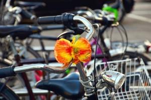 bicycle, metal, flower, bulb, transport, vehicle, steering wheel
