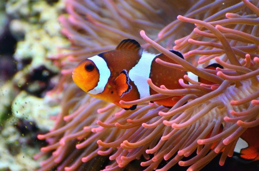 algae, fish, sea, water, colorful