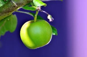 Manzana verde, árbol, rama, fruta, hoja