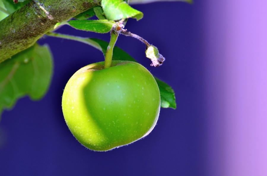 grønt eple, tree, gren, frukt, blad