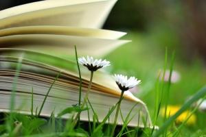 Margarita, flor, libro, hierba, lectura, aprendizaje