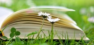 jetel, sedmikráska, květina, kniha, tráva