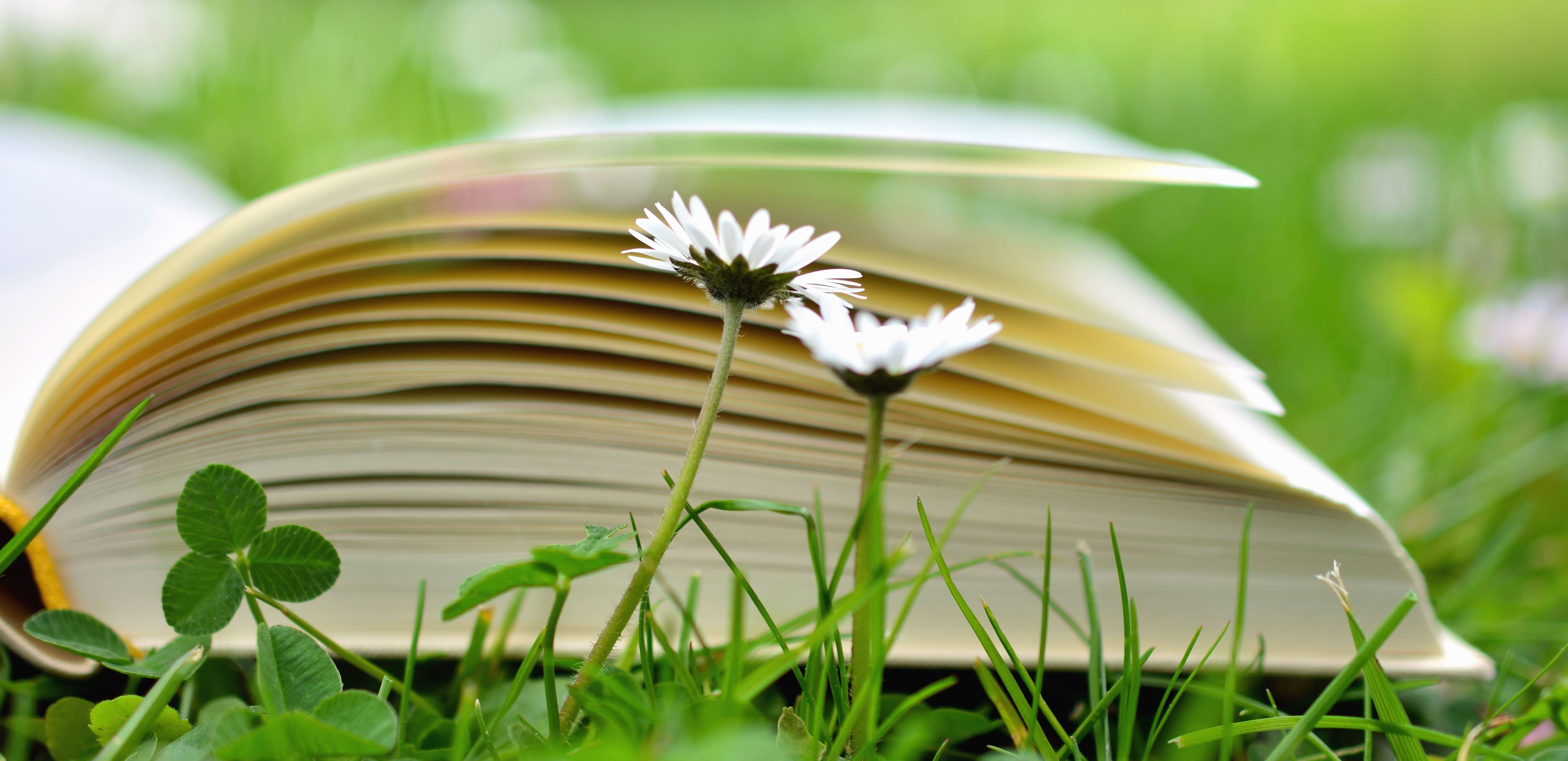Free Picture Clover Daisy Flower Book Grass