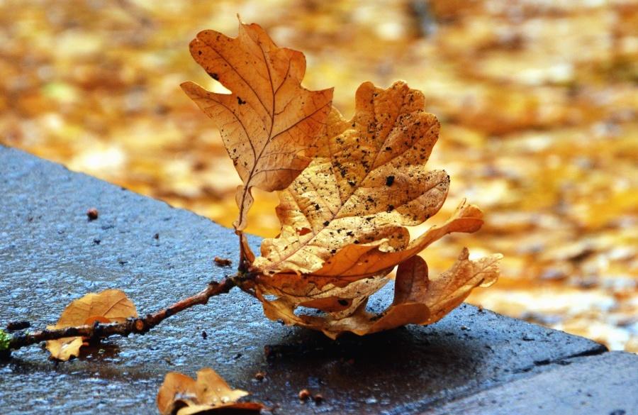 autumn, leaf, concrete, road, nature