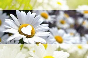 Fleur, floraison, photomontage, pétale, pré, plante, marguerite