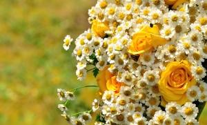 Fleur, rose, pétale, fleur, plante, décoration