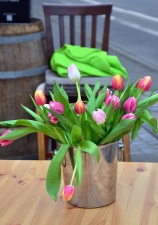 Nature morte, tulipe, seau