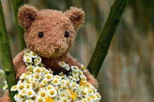 teddy bear, toy, flower, petal, plant