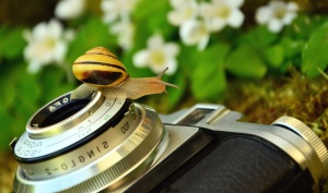 photo camera, lens, snail, flower, retro, mechanism
