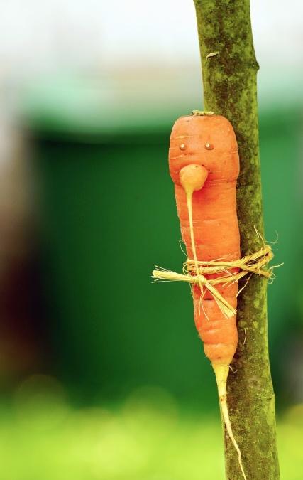 Cuerda, zanahoria, rama, vegetales, árbol, decoración