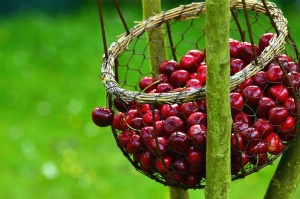 basket, cherry, fruit, food, wood