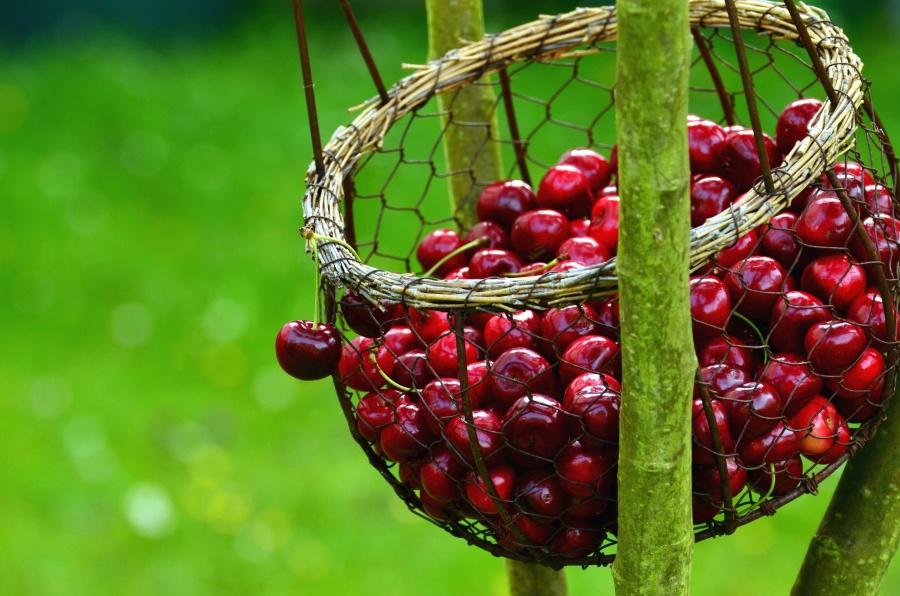 basket, cherry, fruit, food, wood