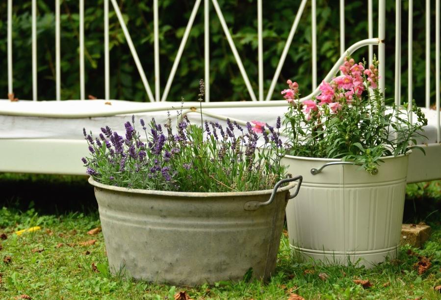 Kostenlose Bild: Eimer, Blume, Gras, Garten, Dekoration, Blüte