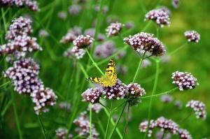 flower, bloom, petal, meadow, butterfly, nature