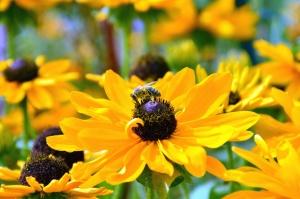cvijet, pčela, oprašivanje, pelud, latica
