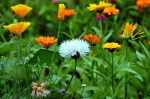 plant, flower, flowering, petal, colors, colorful, nature