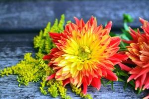 Pétale, fleur, nature morte, plante, table