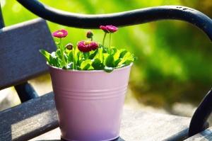 flower pot, flower, bloom, bench, metal