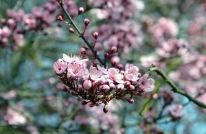 bud, flower, petal, fruit, flowering, branch