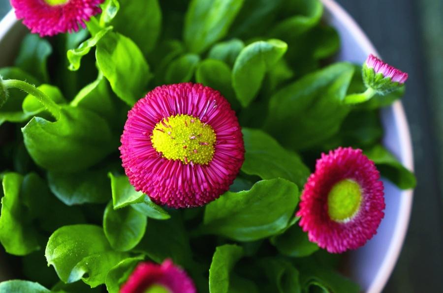 꽃, 꽃잎, 꽃, 잎, 꽃 냄비, 공장