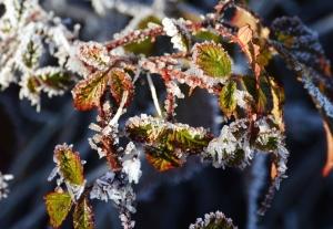 yaprak, bitki, buz, kış, buz, soğuk