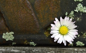 decoration, flower, petal, daisy, wall, moss