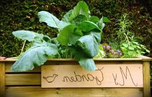 flower, leaf, fence, plant, wood