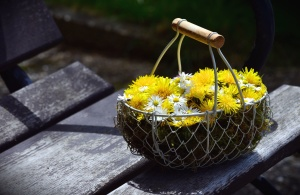 daisy, flower, yellow flower, dandelion, basket, bouquet, plank